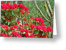 Red Rhododendron Garden Art Prints Rhodies Landscape Baslee Troutman Greeting Card by Baslee Troutman