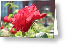 Red Rose Greeting Card by Brian McDunn