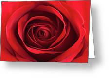 Red Rose Greeting Card by George Lovelace