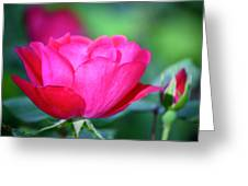 Red Rose Greeting Card by Teresa Mucha