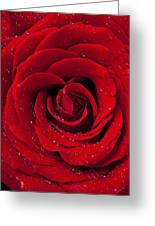 Red Rose With Dew Greeting Card by Garry Gay