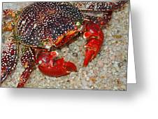 Red Spotted Crab Greeting Card by Karon Melillo DeVega