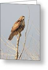 Red-tailed Hawk . 40d11323 Greeting Card by Wingsdomain Art and Photography