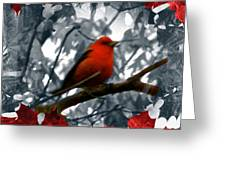 Red Wild Bird Greeting Card by Debra     Vatalaro