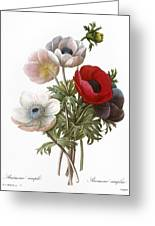 Redoute: Anemone, 1833 Greeting Card by Granger