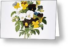 REDOUTE: PANSY, 1833 Greeting Card by Granger