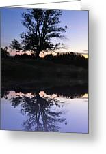 Reflecting Tree Greeting Card by Bill Cannon