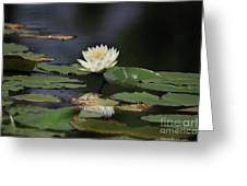 Reflective Lilly Greeting Card by Deborah Benoit