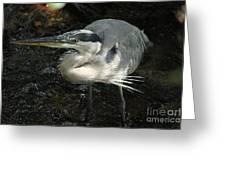 Regal Heron Greeting Card by Theresa Willingham