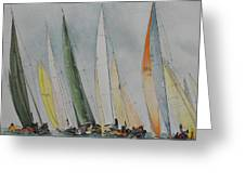 Regatta Greeting Card by Carol McLagan