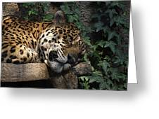 Relaxing Greeting Card by Ernie Echols