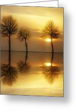 Remains Of The Day Greeting Card by Photodream Art