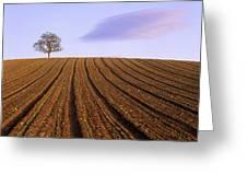 Remote tree in a ploughed field Greeting Card by BERNARD JAUBERT
