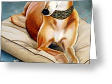 Rescued Greyhound Greeting Card by Sandra Chase