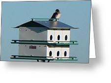 Return Of The Purple Martin Greeting Card by Jerry Browning