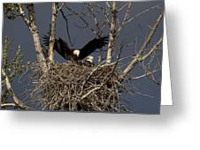 Returning Home To The Nest Greeting Card by Mike  Dawson