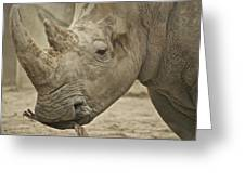 Rhino Greeting Card by Michael Peychich