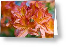 Rhododendron Flowers Greeting Card by Frank Tschakert