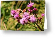 Roadside Beauty Greeting Card by Jame Hayes