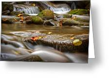 Roaring Fork Stream Great Smoky Mountains Greeting Card by Steve Gadomski