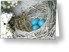 Robin Eggs in a Wreath Greeting Card by Marqueta Graham