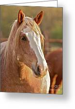 Rodeo Bronc Beauty Greeting Card by Gus McCrea