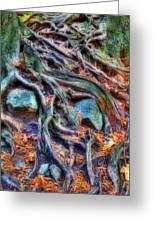 Roots And Rocks Greeting Card by Naman Imagery
