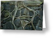 Roots and Rocks Greeting Card by Douglas Barnett