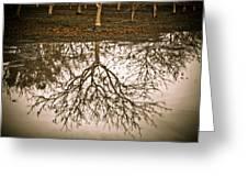 Roots Greeting Card by Derek Selander