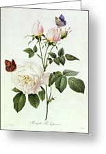 Rosa Bengale The Hymenes Greeting Card by Pierre Joseph Redoute