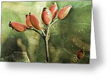 Rose Hips Greeting Card by Mandy Tabatt