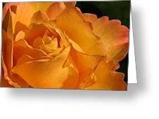 Rose in Ruffles Greeting Card by Mg Rhoades