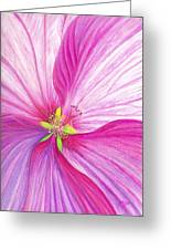 Rose Mallow Greeting Card by Amy Tyler