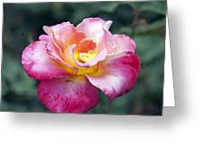 Rosebud Greeting Card by Don  Wright