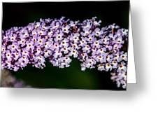 Rows And Flows Of Angel Flowers Greeting Card by John Haldane