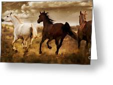 Run For The Hills Greeting Card by Patty Hallman