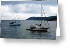 Sailboats In Bar Harbor Greeting Card by Linda Sannuti