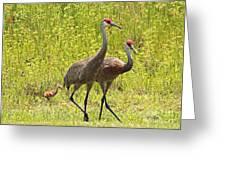 Sandhill Crane Family Greeting Card by Carol Groenen
