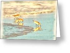 Sandpipers Along The Shoreline Greeting Card by Betsy Foster Breen