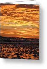 Sanibel Island Greeting Card by Nick Flavin