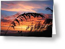 Sanibel Island Sunset Greeting Card by Nick Flavin
