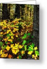 Sassafras Forest II Greeting Card by Dan Carmichael