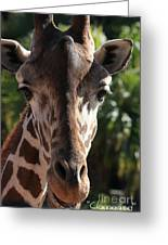 Say Cheese Card Greeting Card by Carol Groenen