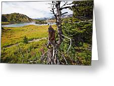 Scenic Alpine Lake And Meadow Greeting Card by George Oze