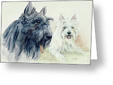 Scottie And Westie Greeting Card by Morgan Fitzsimons