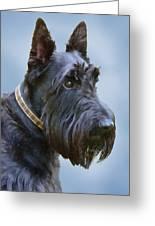 Scottish Terrier Dog Greeting Card by Jennie Marie Schell