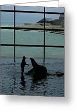 Sea Lion II Greeting Card by Anna Villarreal Garbis