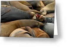 Sea Lions At Pier 39 San Francisco Greeting Card by Sebastian Musial