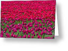 Sea Of Tulips Greeting Card by Mike  Dawson