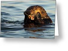 Sea Otter With A Toothache Greeting Card by Max Allen